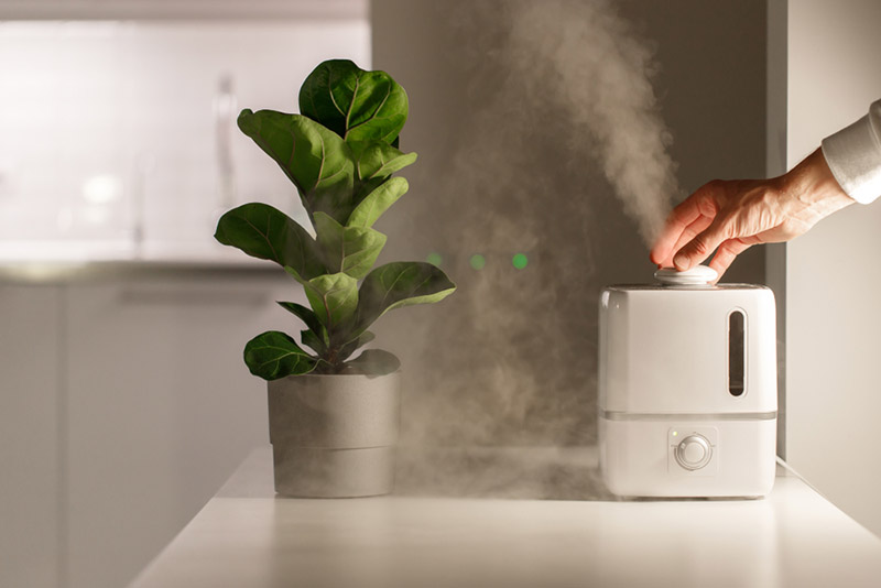 What Can A Cool-mist Humidifier Do? Check Details Here