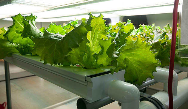 hydroponic products online